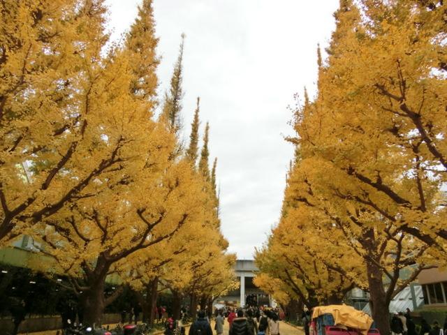 神宮球場 イチョウ並木