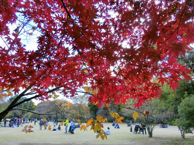 新宿御苑 広場 紅葉